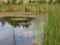 Byparken - 015 - 2011-07-29